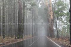 Roads_105