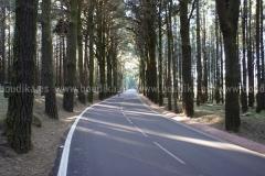 Roads_82