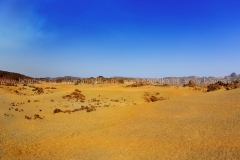 Landscape_300